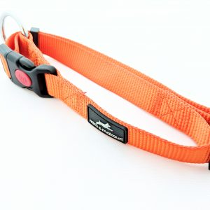 image of an orange dog lead
