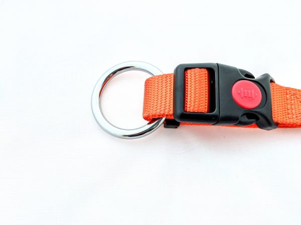 orange dog collar clip