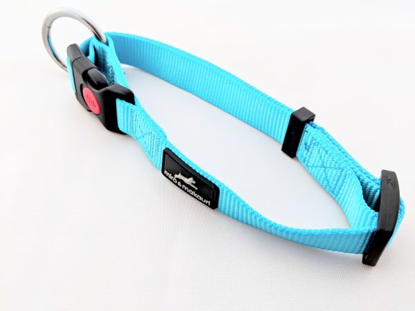 image of a turquoise dog collar