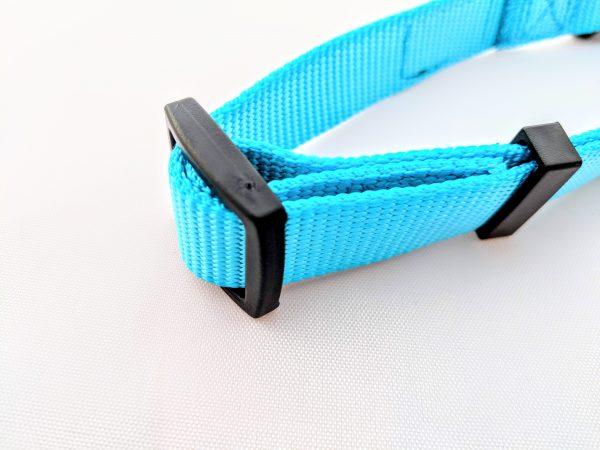 adjustable turquoise dog collar
