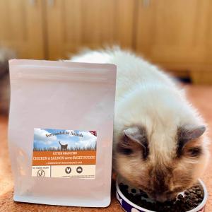 Grain Free Kitten Food – Chicken & Salmon