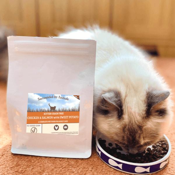 kitten tucking into grain free kitten food