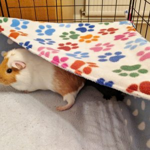 Guinea Pig Fleece Hammock – 3 Fabrics To Choose From