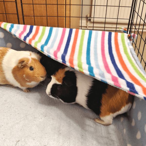 Guinea Pig Fleece Hammock – 3 Fabrics To Choose From