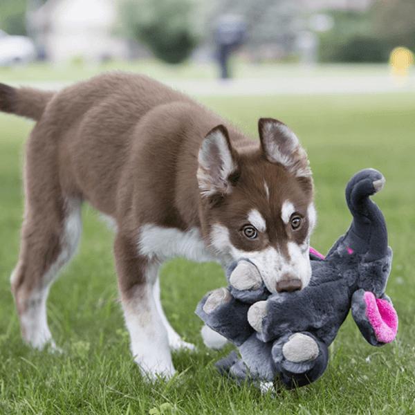 dog's favourite soft toy