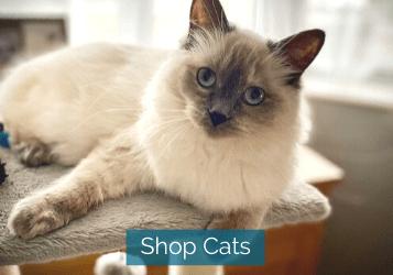 shop cats image