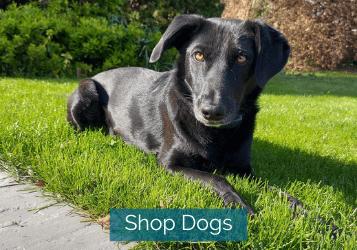 shop dogs image