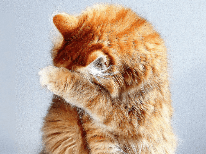 a ginger cat hiding behind it's paw