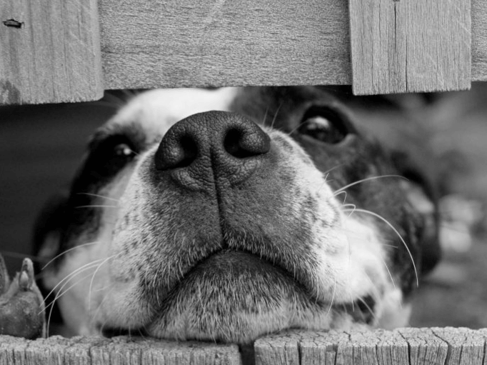 a dog poking it's nose through a fence