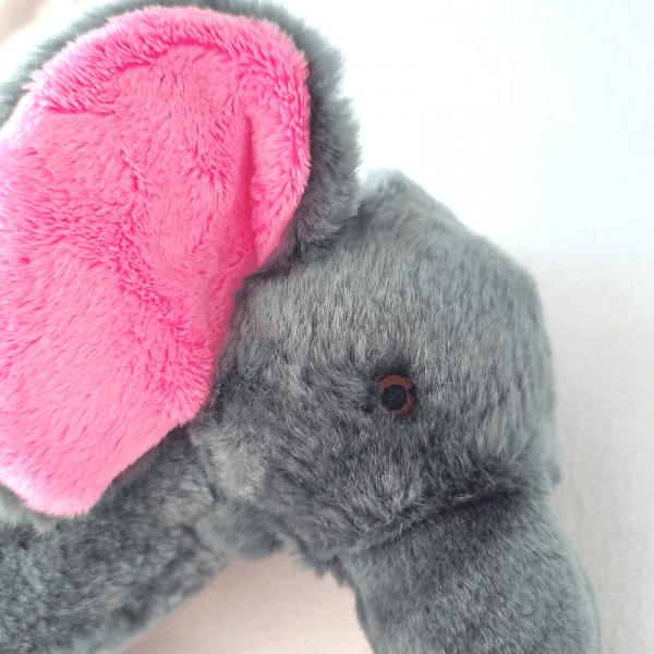 edsel elephant's head and ears close up