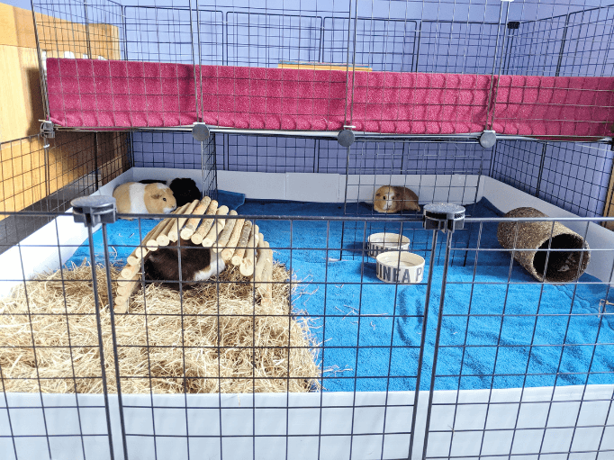 a stacked c & c cage with guinea pigs inside
