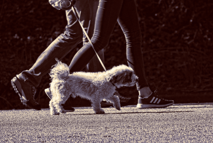 Read more about the article How To Use Your Extendable Dog Lead Safely