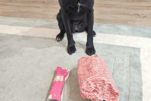 Luna is 4 today! The best way to celebrate your dog's birthday