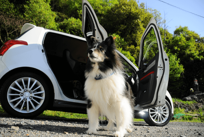 Read more about the article Most important things to know about taking your dog in a car