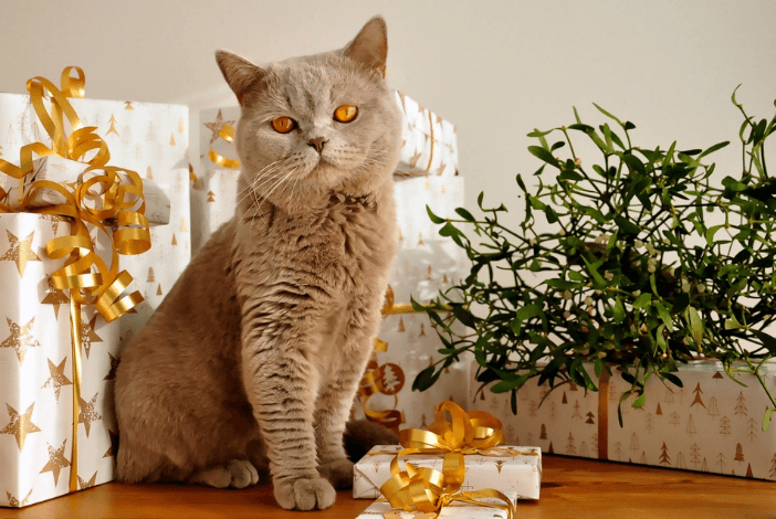 Read more about the article Need Pet Gift Ideas? Here Are Our Top 10 Picks For You Right Now
