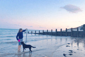 Take your dog swimming at the beach for fun