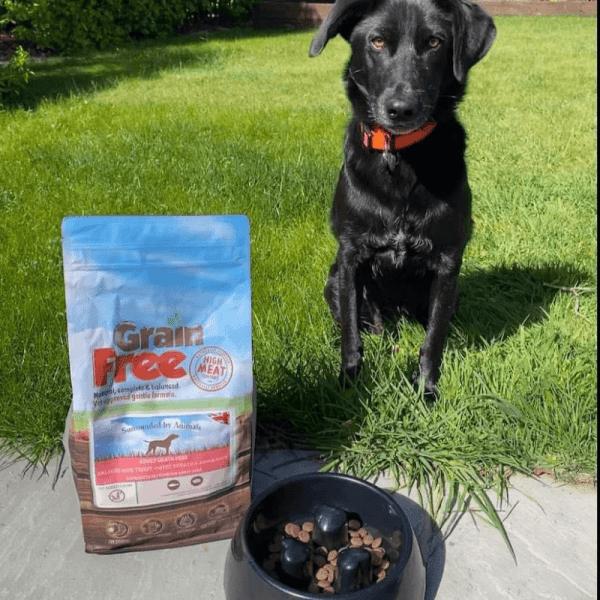 Grain Free Adult Dog Food – Salmon
