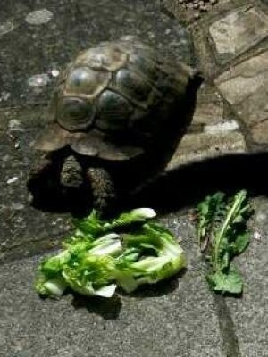 Picture of a tortoise