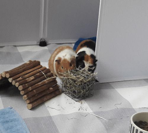 Dot & Duke eating some hay
