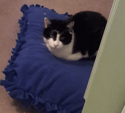 a cat on a homemade bed