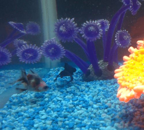 two fish in a fish tank